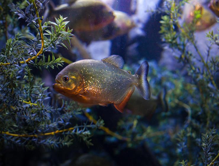 Houston Downtown Aquarium